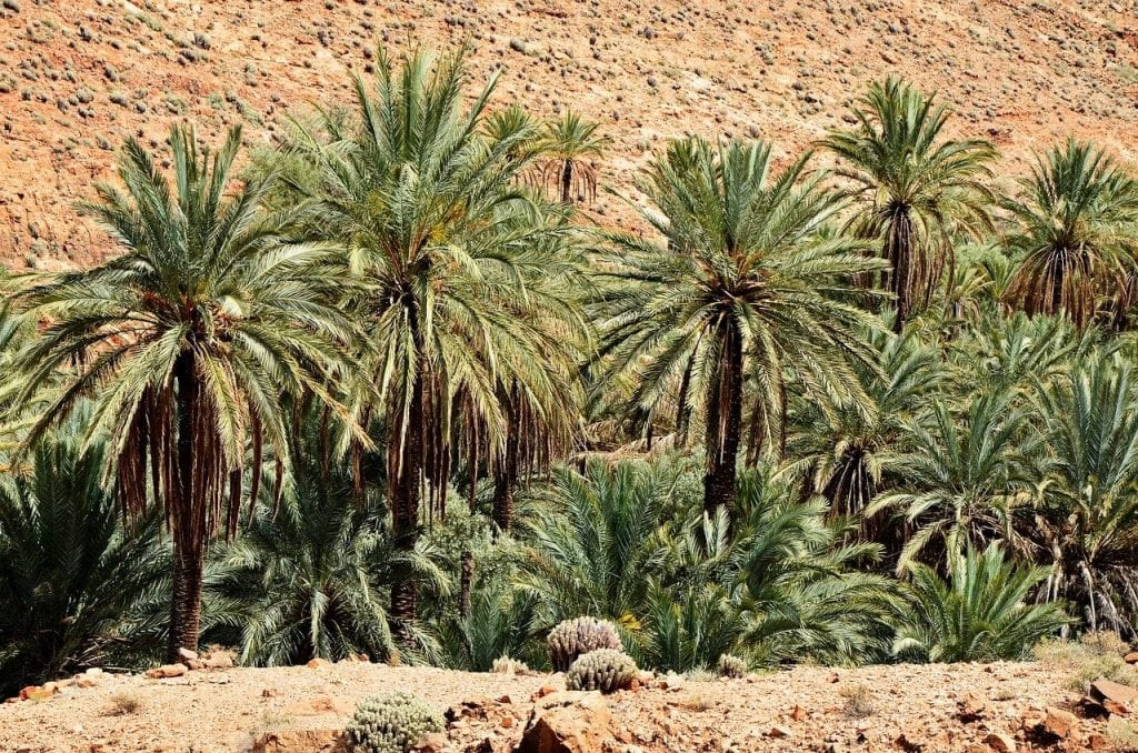 Palm tree Oasis in Sahara desert private tour in Morocco